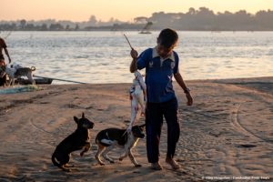 2 dogs eager to grape fish from a boy on Mekong beach