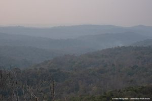 Cambodia Forests