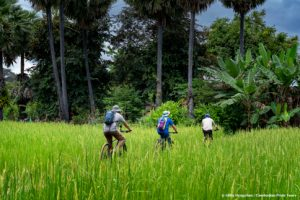 Cycling through rice fields in Angkor temple complex