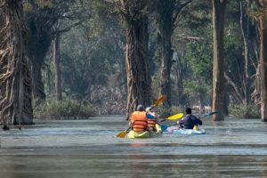 Kayaking through beautiful tree roots Mekong flooded forests of Ramsar Wetlands