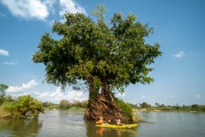 Kayaking through Mekong flooded forests Ramsar Wetlands tree roots