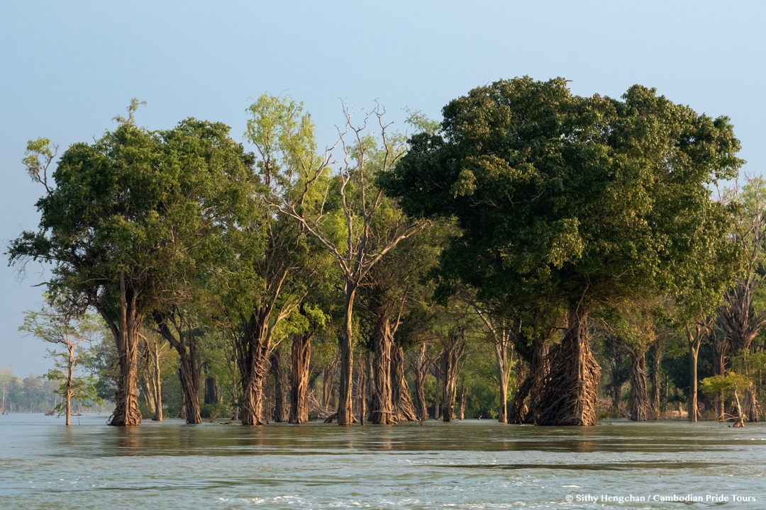 Beautiful Mekong flooded forests of Ramsar Wetlands