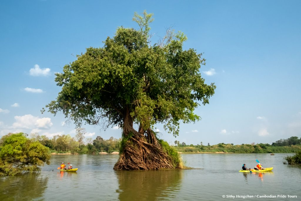 Kayaking through Mekong flooded forests of Ramsar Wetlands - Tree-roots