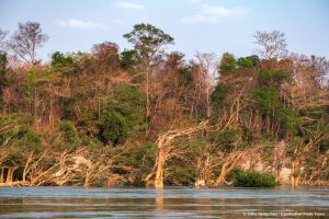 Mekong flooded forests Cambodia Landscape