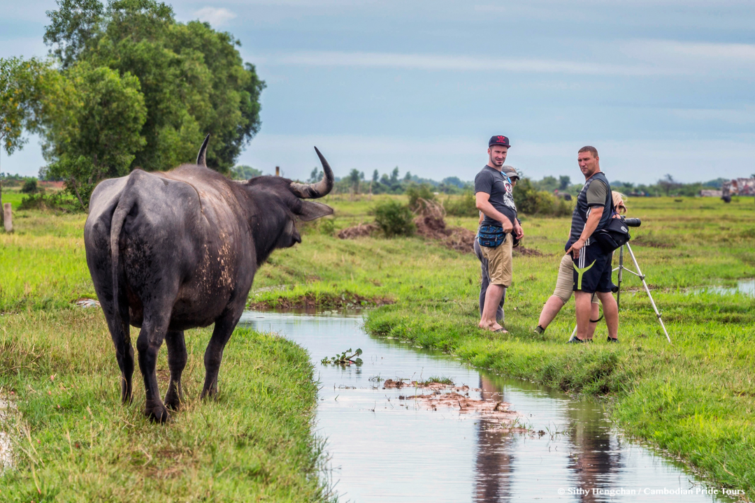 Water buffalo and the at bird watchers