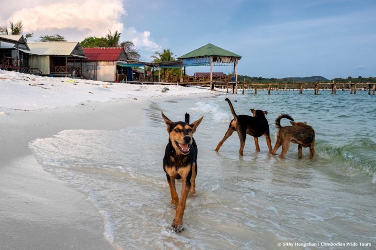 Dogs on the beach Koh Rong