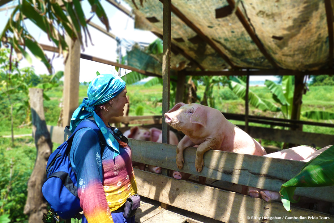 Friendly pig approaching visitor