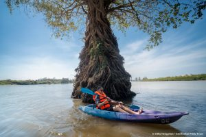 Kayaking through beautiful tree roots in the Mekong flooded forests Ramsar Wetlands
