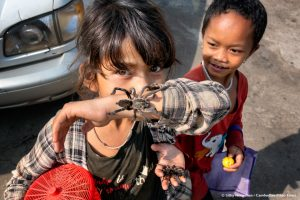 Cambodian little girls with her tarantula
