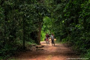 Local wood collectors in Angkor Thom