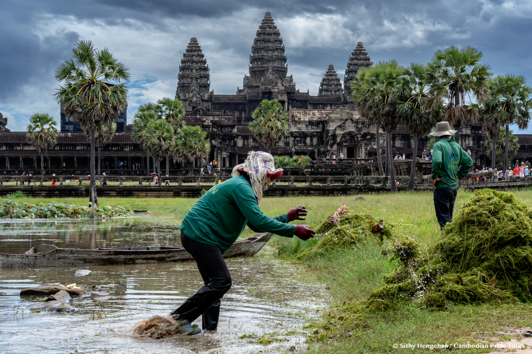 Workers clearing grass from the pond in front of Angkor Wat Temple